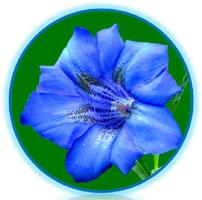logo AMATRE